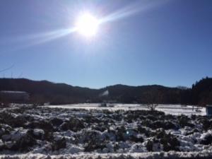 2016年の雪景色
