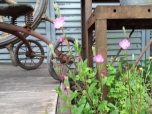 入り口前の小さな花