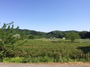 店の前の風景