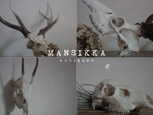 鹿の頭蓋骨4点