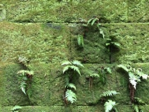 猿島画像4