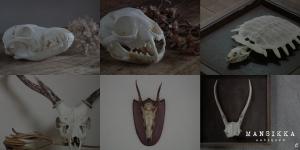 色々な動物の骨6点