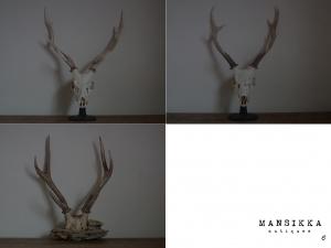雄鹿の頭蓋骨3点