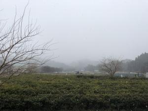 3月21日に降る雪