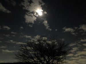 月明かりの画像