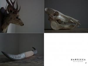 鹿の剥製と猪の頭蓋骨と水牛の角