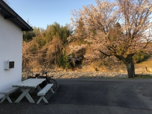 お店外観と桜の木