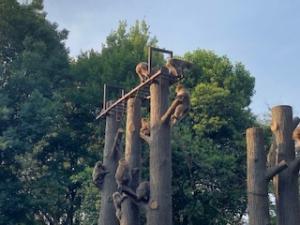羽村市動物公園の猿山