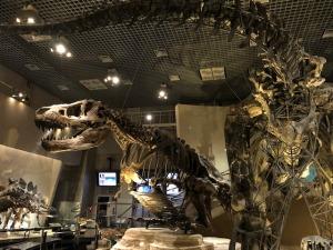 恐竜の化石画像