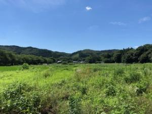 夏の田畑の風景